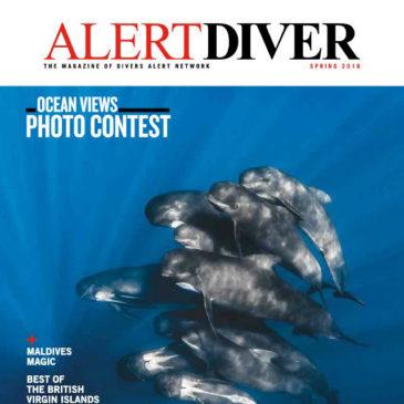 Alert Diver | Giants of the Undead Med | Article