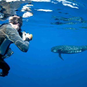 Danny Kessler photographing a long-finned pilot whale, Globicephala melas | Shipping Lanes, Strait of Gibraltar