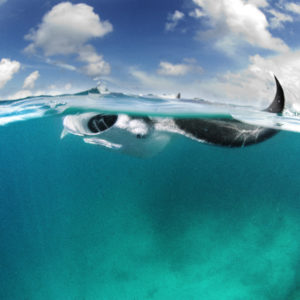 Manta Ray split level shot | Hanifaru, Maldives